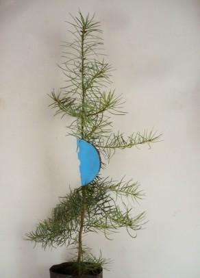 blaue Fegeschutz-Klemmen